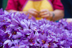 تالار محصولات کشاورزی بورس کالا میزبان عرضه ۵ تن زعفران