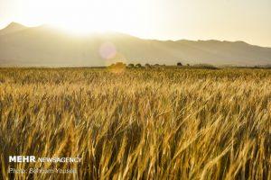 ضرورت ارتقای بهرهوری تولید در اراضی دیم برای توسعه کشاورزی