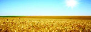 کشاورزی با ثباتترین حوزه در مقابله با تحریم است