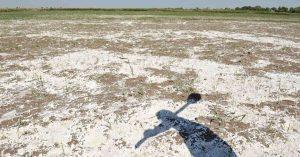شوری خاک کشاورزی خراسان شمالی را تهدید میکند