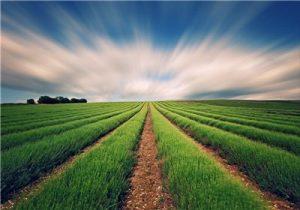 اجرای الگوی کشت کشاورزی امسال هم امکانپذیر نیست.