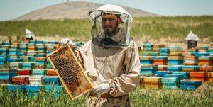 پرداخت ۱۳ میلیارد ریال تسهیلات به زنبورداران جدید