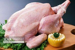 مرغداران: نوسان قیمت مرغ نتیجه تصمیمات ستاد تنظیم بازار است،