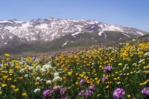 اختصاص بیشترین سهم کشاورز کارت کشور به کردستانی ها
