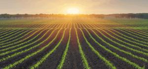 تولید محصولات کشاورزی ایران میتواند ۲.۵ برابر شود