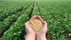 گزارش تسنیم| ادعای خودکفایی ۹۵ درصدی در تولید بذر درست است؟