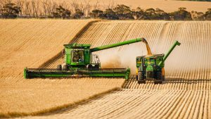 ضرر ۱۰۰۰ تومانی کشاورزان در تولید هر کیلو گندم/چرا دولت در تشکیل شورای قیمتگذاری وقتکُشی میکند؟