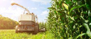 کشاورزی در شرایط سخت اقتصادی/ کشاورزان استان بوشهر حمایت شوند